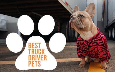 Best Truck Driver Pets